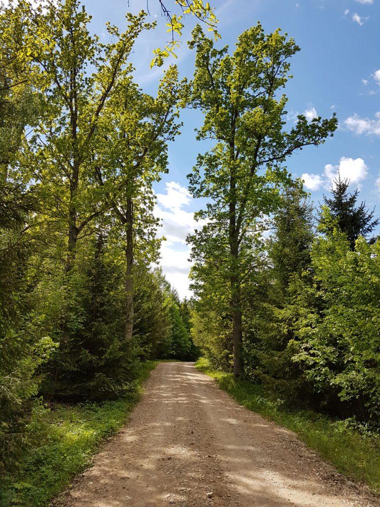 Latvia Pokaiņi Forest Escaperies