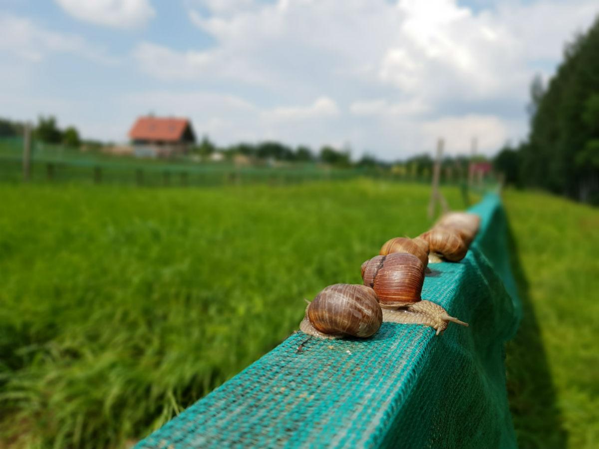 Edible snail nursery _ Escaperies _ idaadventures